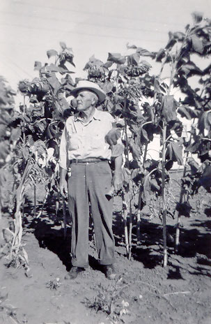 Historic photo showing Leslie Allen with his sunflowers.