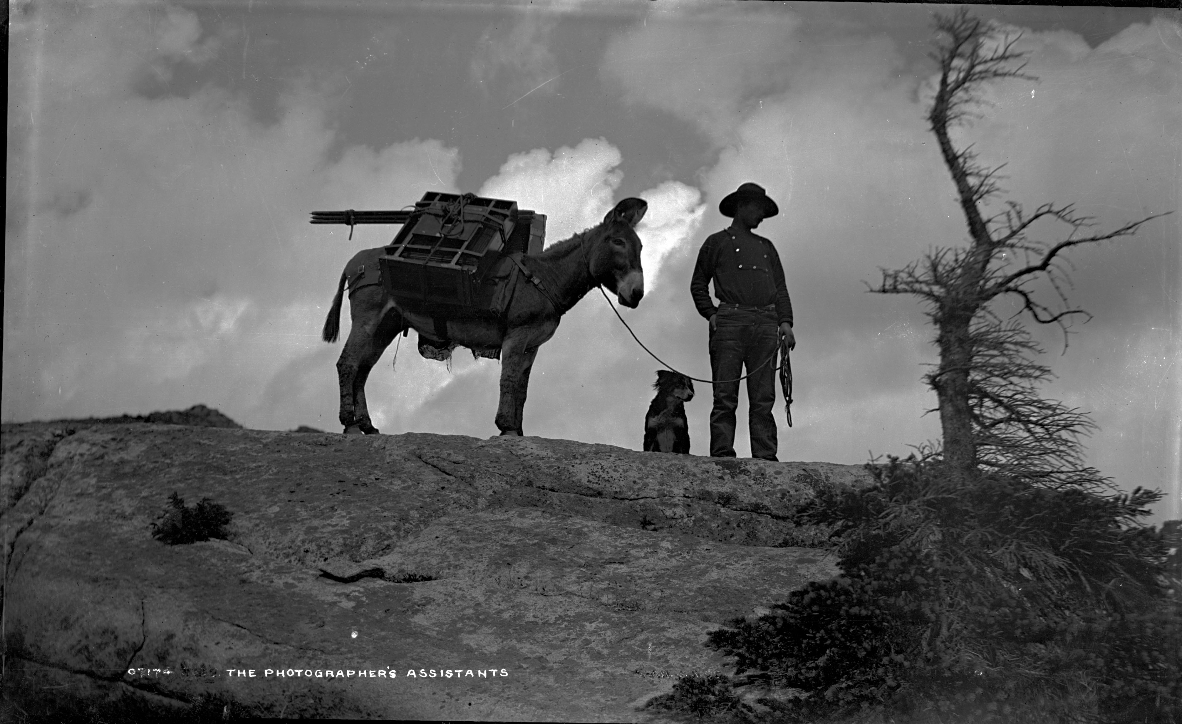 William Henry Jackson posing with a mule atop a cliff.
