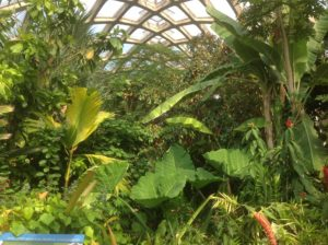 Inside the Boettcher Memorial Conservatory, Denver Botanic Gardens.