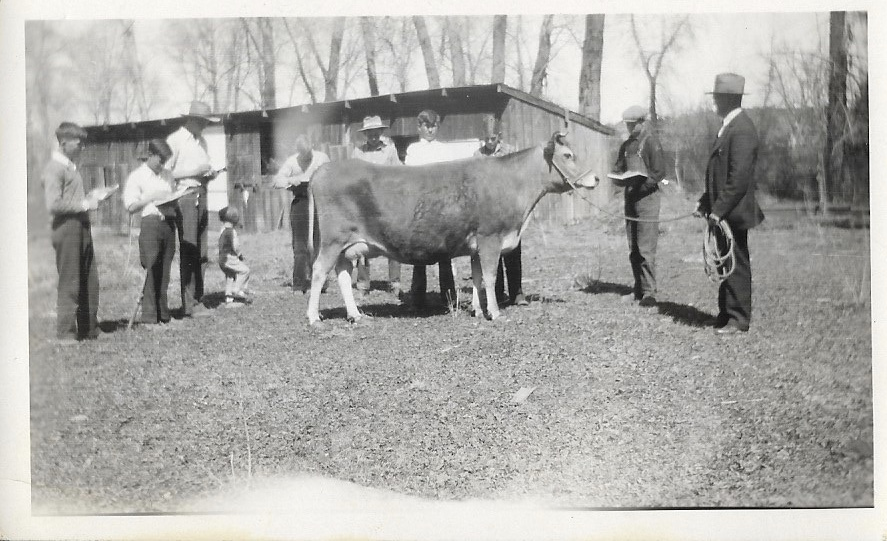 Farmers pose with a cow in a black and white photo