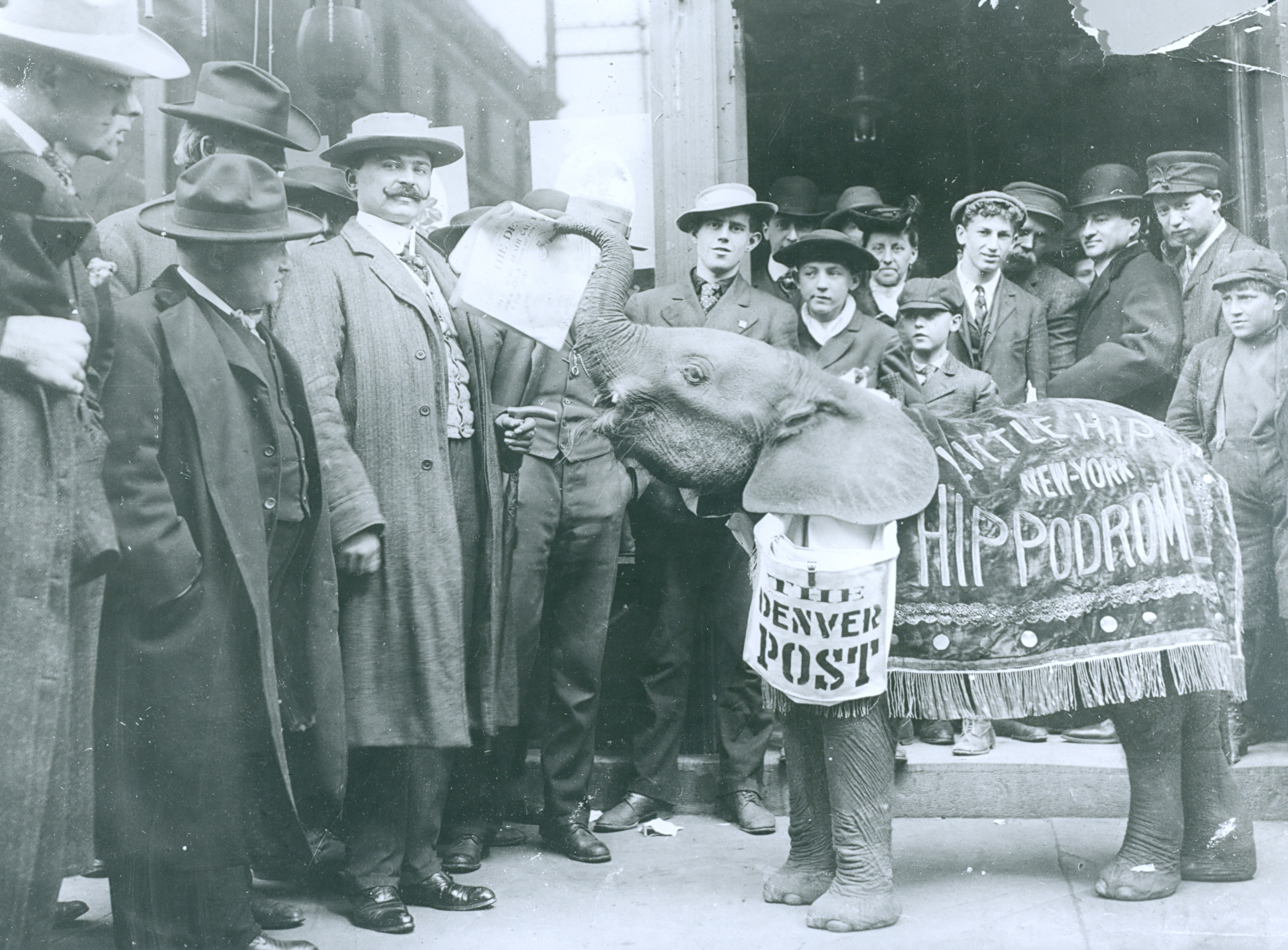 Denver Post elephant paper seller 1920