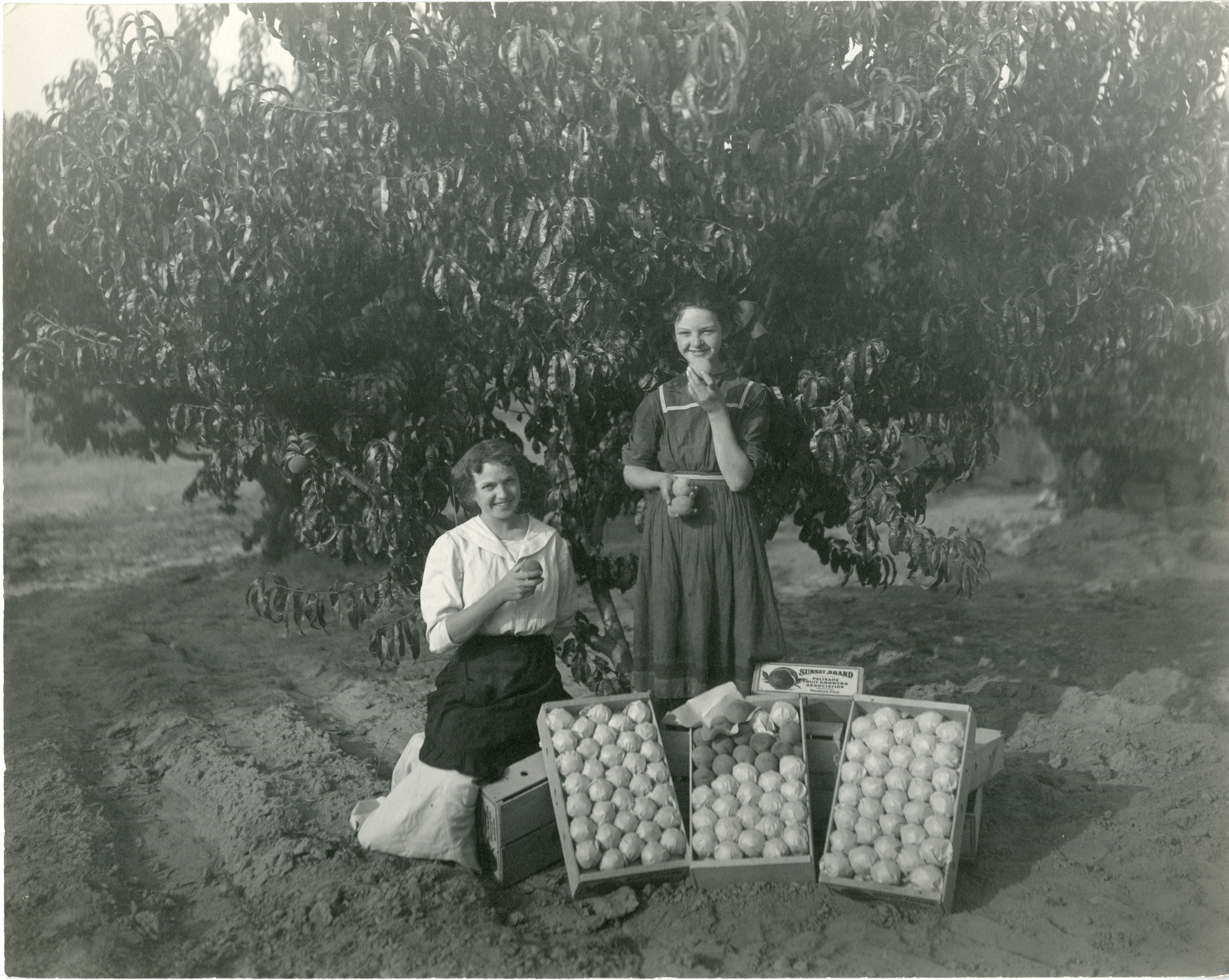 photo of women in peach orchard