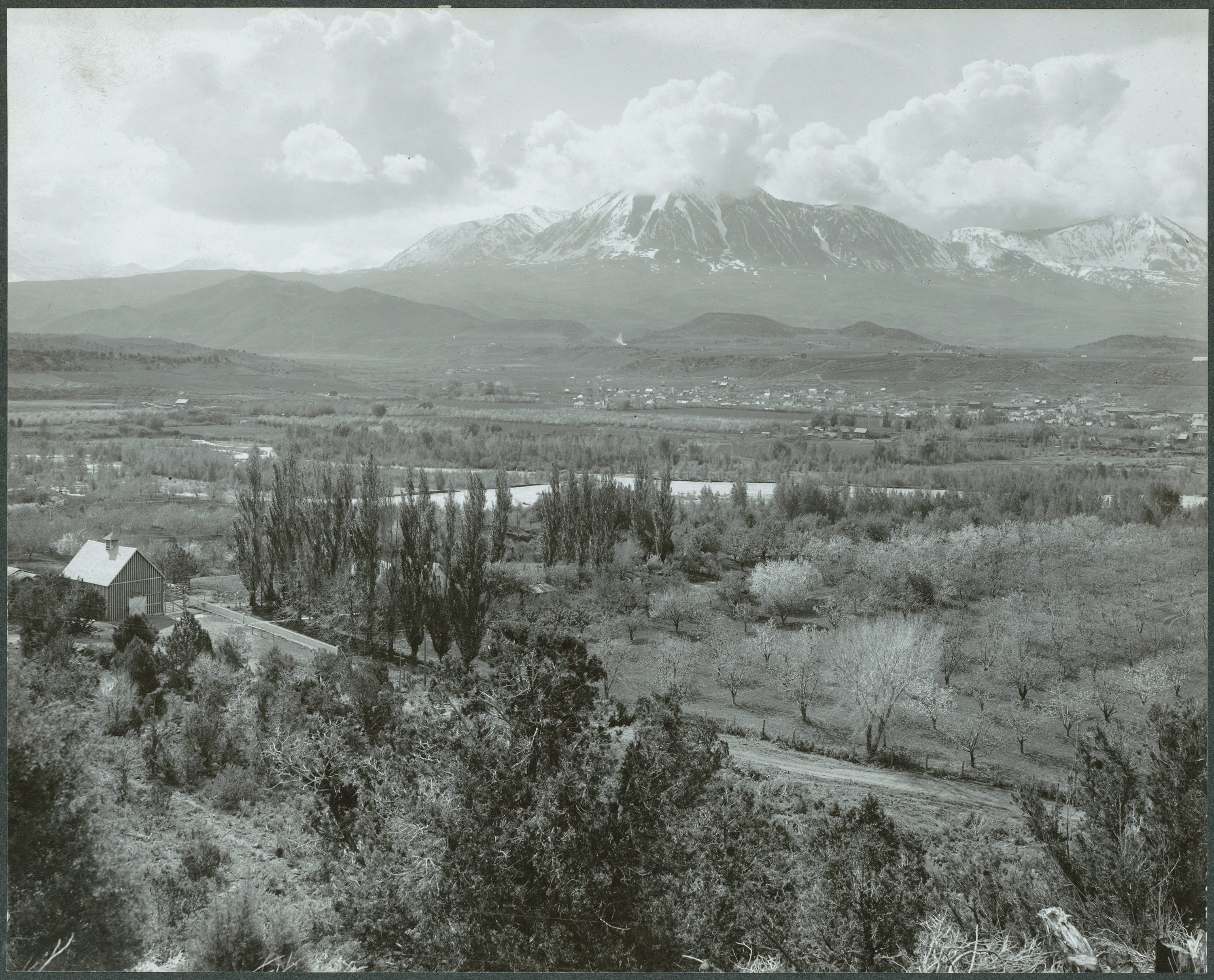 photo of orchards near mountains