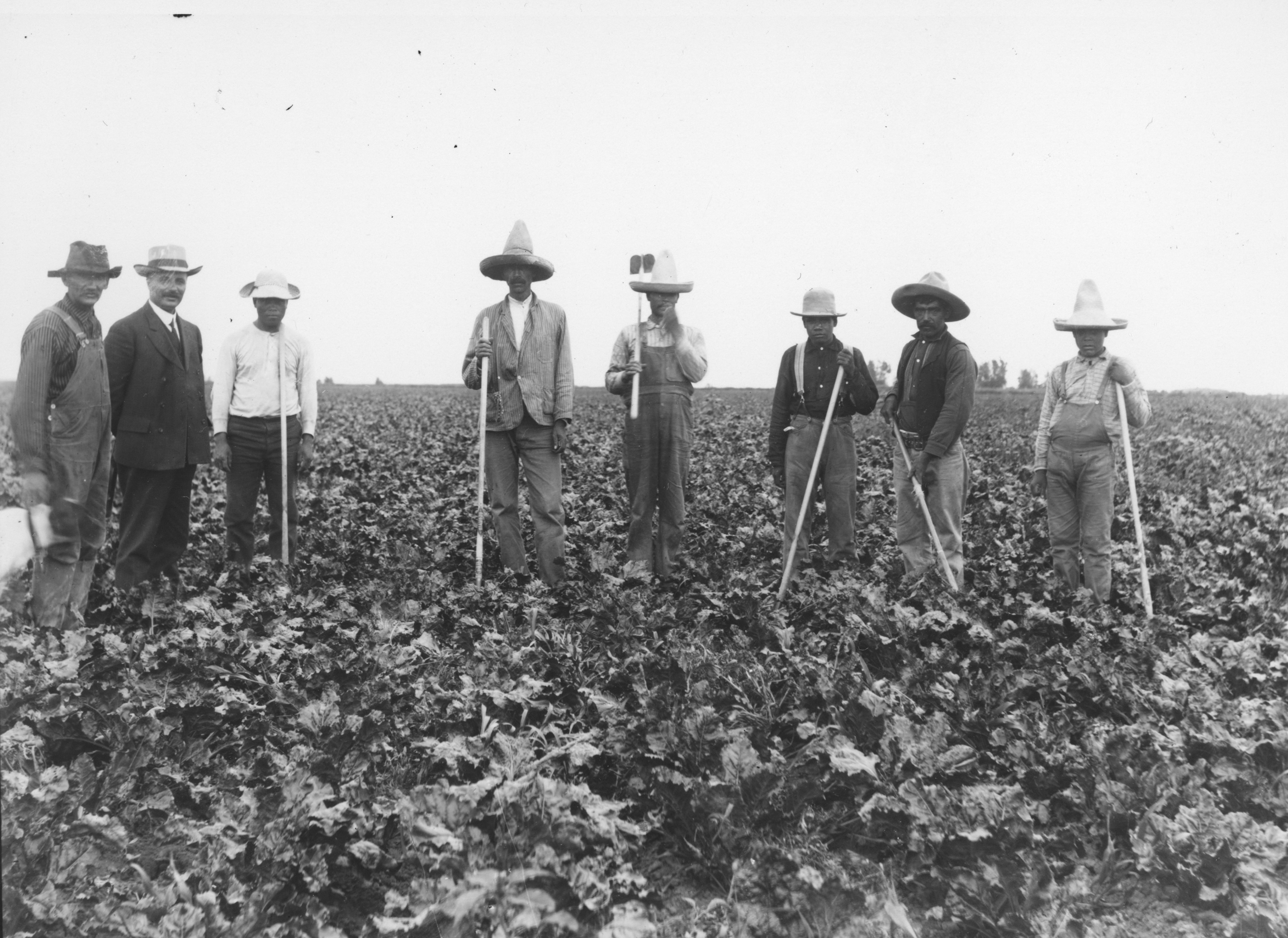 laborers in field of beets