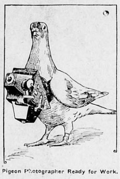 Newspaper illustration of a pigeon with a camera around its neck.