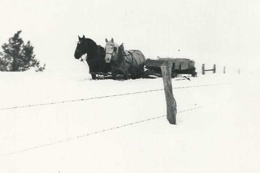 Historic image showing a team and sled, 1931 (5DL.4760)