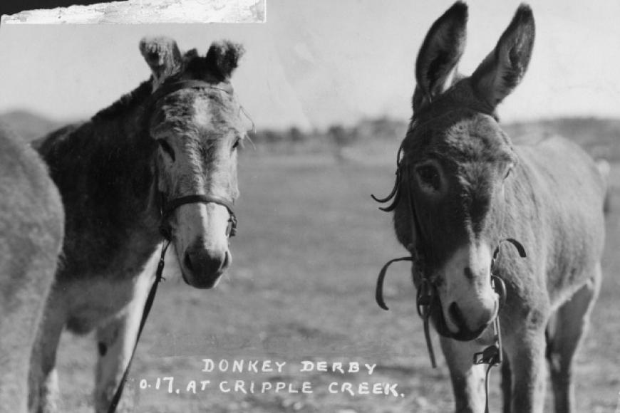 photo of donkeys