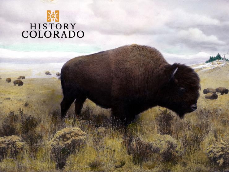 PH.PROP.3011, American bison