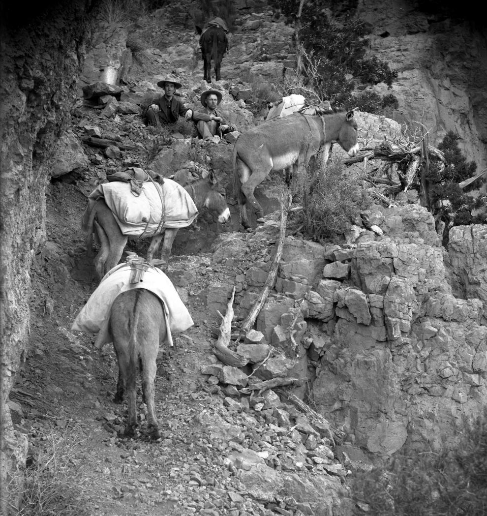 Sidney Foote and Walter Johnson, along with a few mules carrying equipment, pause to sit awhile before continuing to hike up a steep mountain incline.